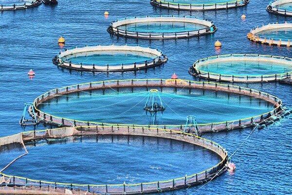 افزایش بهره وری و فراوری آذربایجان شرقی با پرورش ماهی در قفس