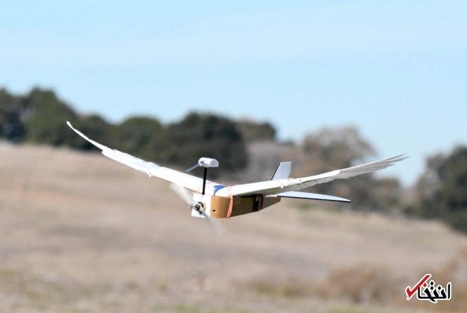 انقلابی در صنعت هواپیمایی در راه است؟ ، این ربات پرنده حرکات بال پرندگان را تقلید می نماید