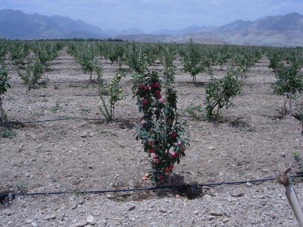 اجرای 130 طرح توسعه باغ ها در شهرستان فارسان