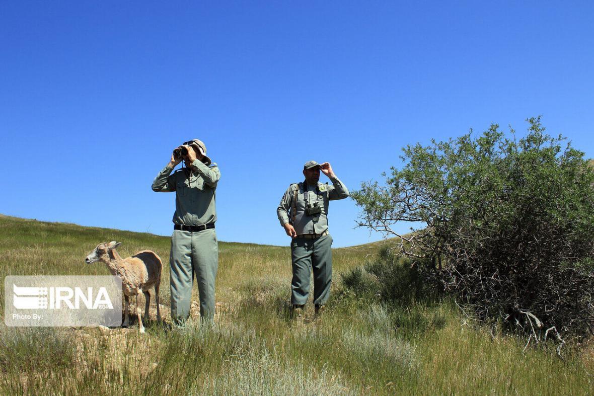 خبرنگاران شکارچیان کل وحشی در باشت شناسایی و دستگیر شدند
