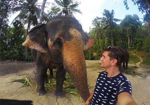 دریافت عکس سلفی توسط یک فیل!