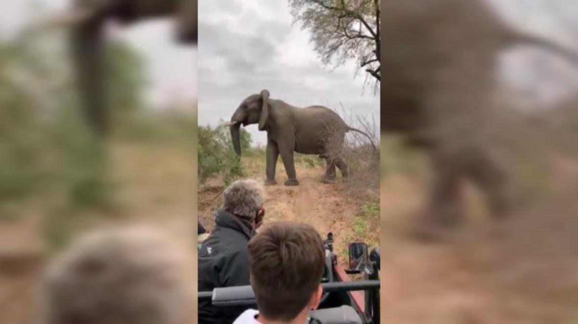 حمله فیل عصبانی به پلنگ ها پس از شکار ایمپالا