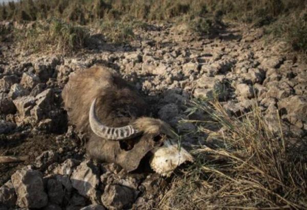 واکنش محیط زیست به خشک شدن هورالعظیم: طبیعی است!