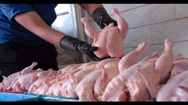 تامین گوشت مرغ مورد نیاز استان در ماه آینده